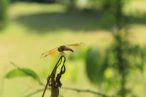 Macro Photography Without A Macro Lens